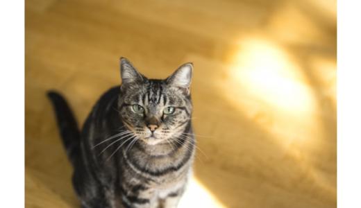 コルクマットで猫の快適な生活空間を作ろう