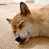 コルクマットは室内犬に最適な床材!そのメリットとは