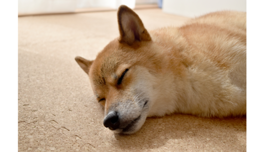 コルクマットは室内犬にオススメの床材